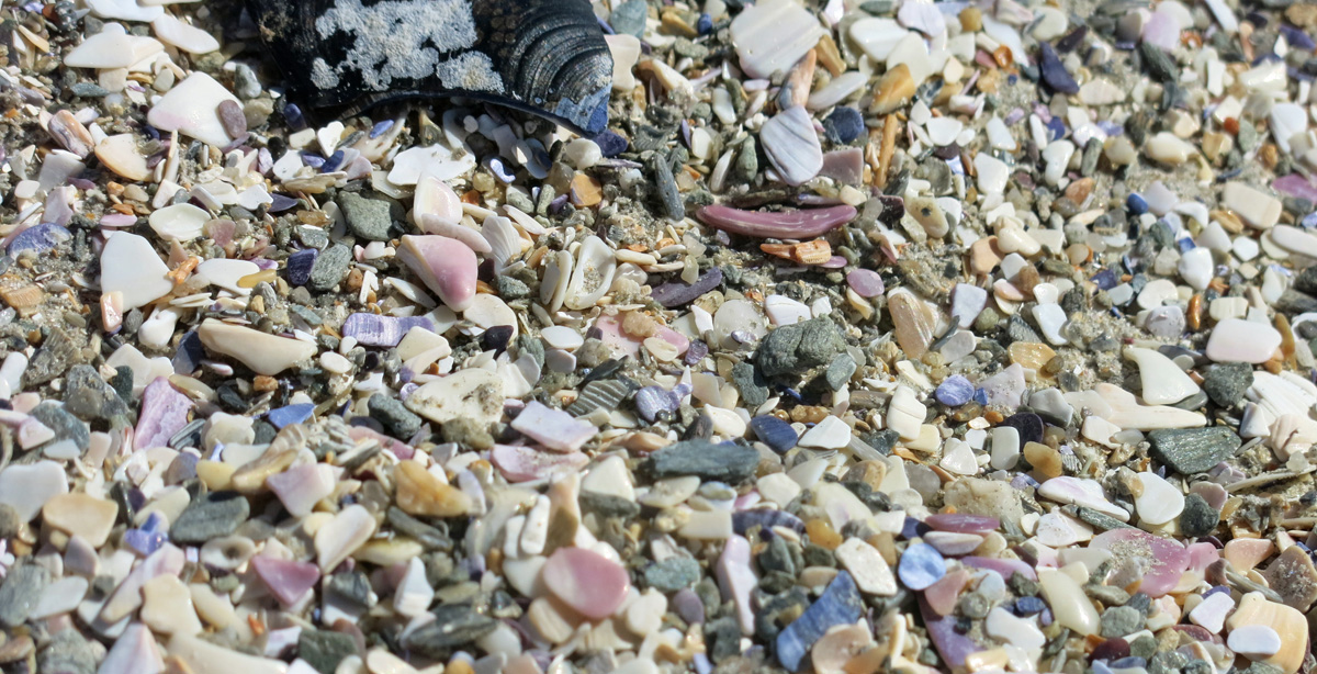 Crushed shells 027