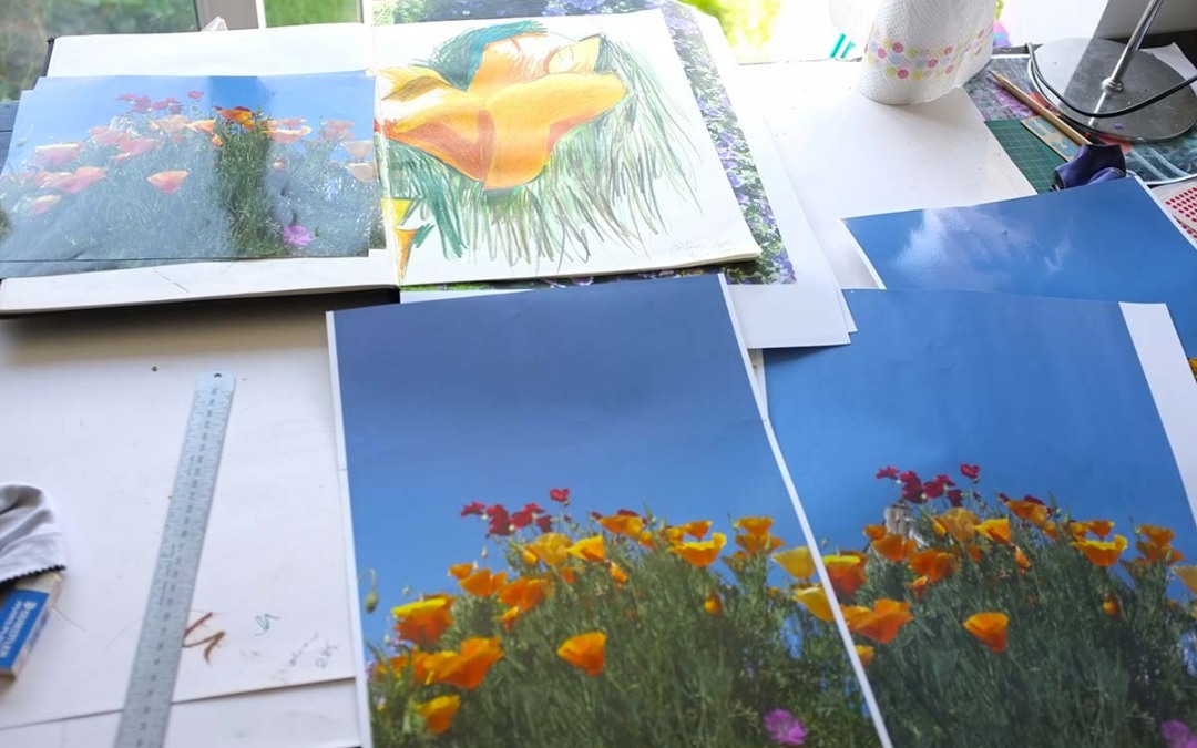 Drawing and the Garden