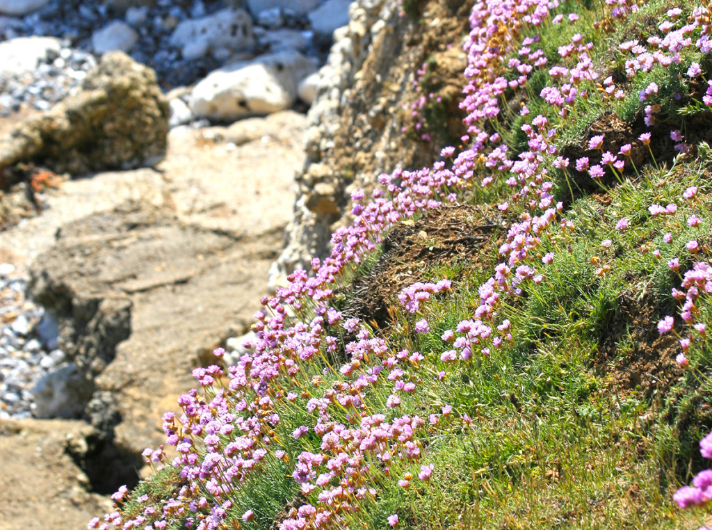 pink fringes for the cliff face