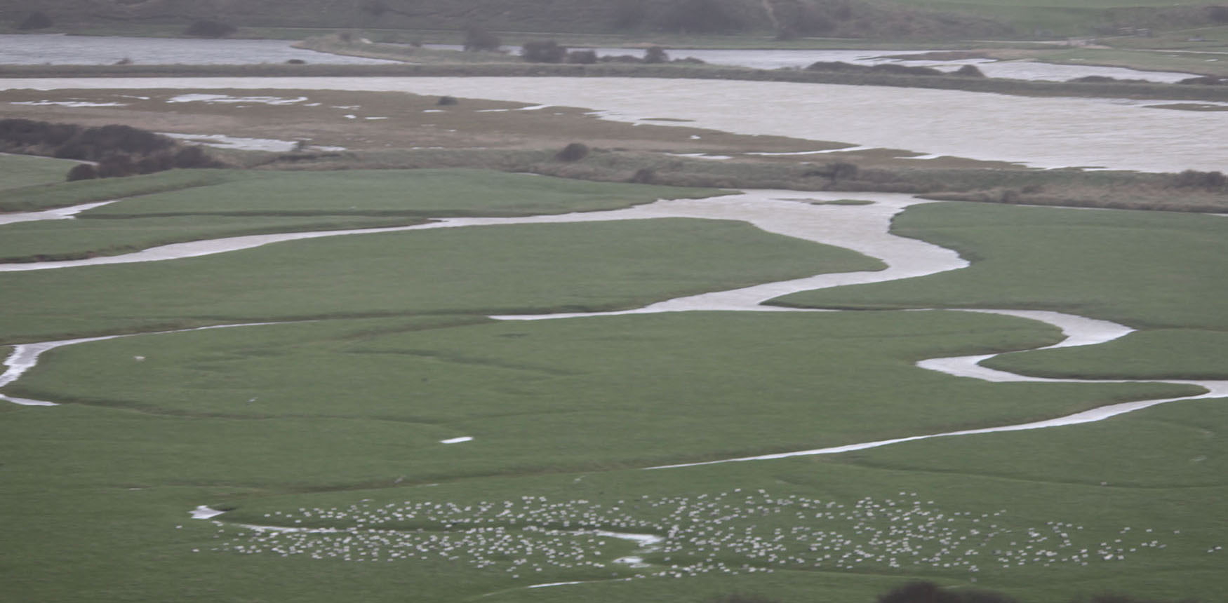 The gulls were taking shelter from the stormy winds , gossiping by the Cuckmere