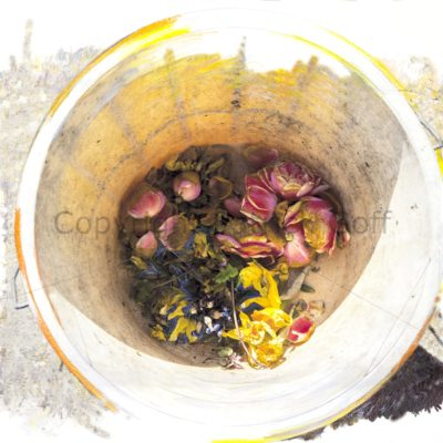 Giclee print brings to life the garden weeding bucket with its springtime load of deadheaded daffs etc..